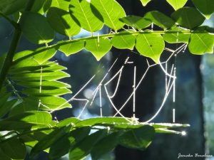 green leaves with spider's web
