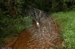 The web at above the water represents the beauty of the spiders work.